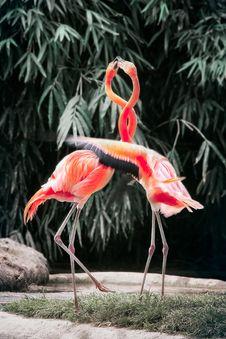 Free Two Pink Flamingos Stock Photos - 119844603