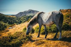 Free Photo Of White And Gray Horse Grazing Royalty Free Stock Photos - 119844818