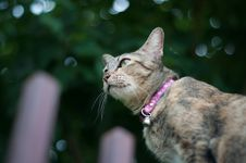 Free Shallow Focus Photo Of Brown Tabby Cat Stock Photo - 119844830