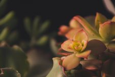 Free Focus Photography Of Green Petaled Flowers Royalty Free Stock Image - 119844836