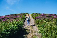 Free Woman Walking Alone In Between Purple Flower Field Stock Image - 119844871