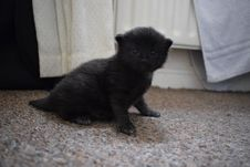 Free Cat, Black, Black Cat, Mammal Stock Photos - 119866023