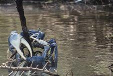 Free Water, Tree, Water Bird, Bird Stock Photos - 119866183