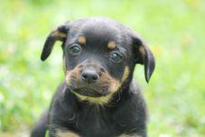 Free Dog, Dog Like Mammal, Dog Breed, Mammal Stock Photography - 119866192