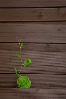 Free Green, Leaf, Wood, Wood Stain Royalty Free Stock Photography - 119866237