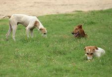 Free Dog Breed, Grass, Dog, Grassland Stock Photography - 119866532