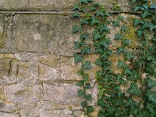 Free Wall, Vegetation, Stone Wall, Ivy Stock Photo - 119866880