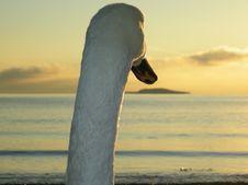 Free Sky, Water Bird, Beak, Sea Royalty Free Stock Images - 119866909