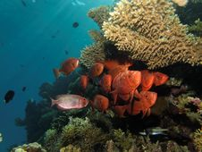Free Coral Reef, Ecosystem, Reef, Marine Biology Royalty Free Stock Photography - 119866967