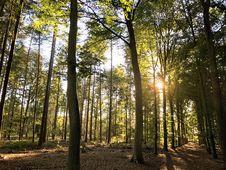 Free Woodland, Nature, Forest, Tree Stock Image - 119867021