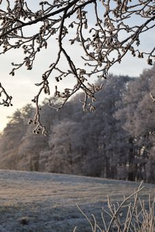 Free Branch, Tree, Frost, Winter Royalty Free Stock Images - 119867059
