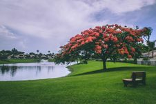 Free Photo Of Red Flowering Trees Beside Body Of Water Stock Photo - 119926290