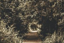 Free Silhouette Photography Of Tree Tunnel Royalty Free Stock Image - 119926316