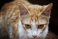 Free Shallow Focus Photography Of Orange Tabby Cat Stock Photo - 119926340