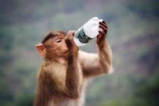 Free Primate Holding Clear And Black Labeled Bottle Stock Image - 119926341