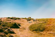 Free Horses On The Hill Royalty Free Stock Image - 119926366