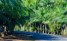Free Gray Concrete Road Between Green Palm Tress Royalty Free Stock Image - 119926376