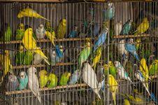 Free Bird, Common Pet Parakeet, Parakeet, Parrot Royalty Free Stock Photo - 119960475