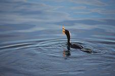 Free Water, Sea, Wave, Bird Royalty Free Stock Image - 119960576