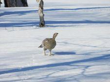 Free Bird, Water Bird, Fauna, Duck Stock Photo - 119960800