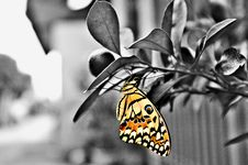 Free Butterfly, Moths And Butterflies, Black And White, Insect Stock Images - 119960834