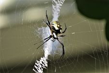 Free Spider, Arachnid, Invertebrate, Orb Weaver Spider Royalty Free Stock Photography - 119960907