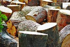 Free Tree, Wood, Trunk, Tree Stump Stock Images - 119960914
