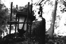 Free Black, Black And White, Monochrome Photography, Tree Stock Photo - 119960990