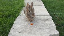 Free Fauna, Mammal, Rabbit, Grass Stock Image - 119961221
