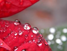 Free Red, Water, Dew, Drop Stock Photo - 119961390
