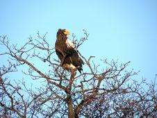 Free Bird, Eagle, Bird Of Prey, Ecosystem Royalty Free Stock Photography - 119961447
