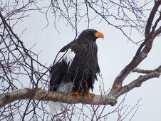 Free Eagle, Bird, Bird Of Prey, Beak Stock Photo - 119961570