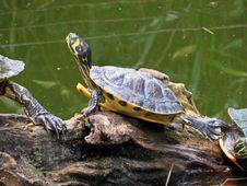 Free Emydidae, Turtle, Reptile, Tortoise Stock Image - 119961791
