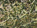 Free Desert Cacti Stock Images - 121384