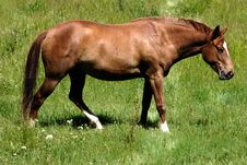 Free Brown Horse Grazing Stock Images - 122194
