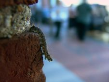 Free Catapillar Crawling Down Brick Wall Stock Photos - 123303