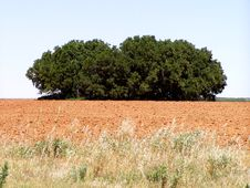 Free Clump Of Trees Royalty Free Stock Image - 124506