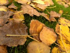Free Yellow Leaves Royalty Free Stock Photo - 124925