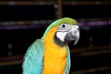 Free Beautiful Colorful Parrot Stock Image - 125161