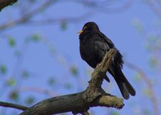 Free Black Bird Stock Photo - 125190