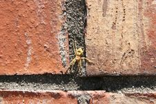 Free Yellow Spider On Brick Royalty Free Stock Photo - 125215