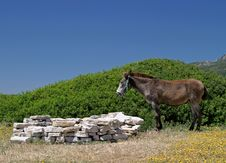 Free Donkey Standing In A Field Next To A Beach In Spain Stock Photo - 125480