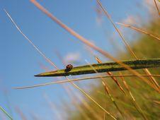 Free Ladybug Stock Photo - 125720
