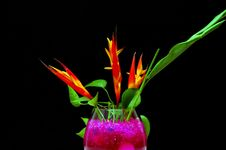 Free Flower In The Dark Stock Photos - 127453