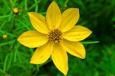 Free Yellow Starburst Royalty Free Stock Images - 127669