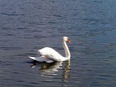 Free Swan Stock Photo - 128670