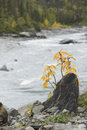 Free Seasonal Fall Image Stock Photography - 1200142