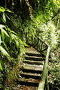 Free Path In The Forest Royalty Free Stock Image - 1200786