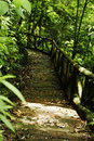 Free Path In The Forest Royalty Free Stock Images - 1200829