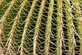 Free Cactus Closeup Stock Images - 1201154